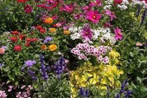 Многолетние садовые цветы, цветущие все лето: фото с названиями