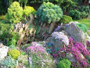 Красота альпийских горок – выбор растений и правила оформления