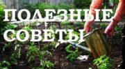 Железный купорос – правила обработки сада
