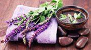 Растение Шалфей (Салвия) – выращиваем на даче с пользой для себя