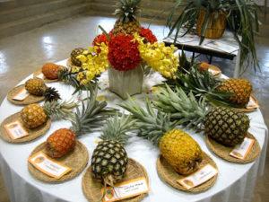 Выращиваем ананас в домашних условиях - секреты посадки и ухода